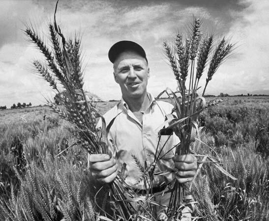 Norman Ernst Borlaug, B.Sc